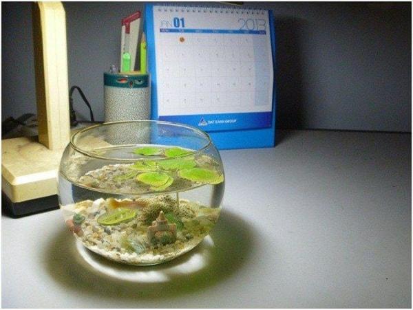 Bể cá mini đem lại sự sinh động cho bàn làm việc