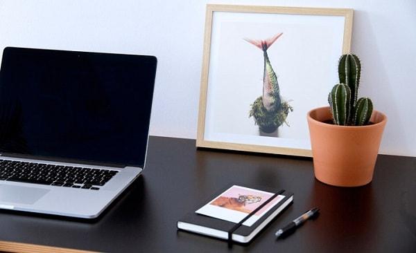 Không nên đặt cây xương rồng trên bàn làm việc