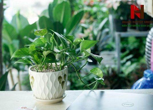 Tuổi Mậu Thìn sinh năm 1988 nên trồng cây gì ở bàn làm việc?